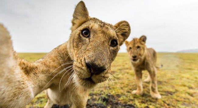Animais tirando selfie