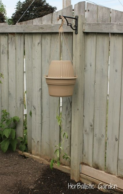 25 Best Images About Gardening Topsy Turvy Wanna Be On 400 x 300