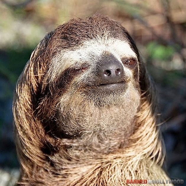 Honorary post - pleased sloth APPROVES!: Slothi Sloths, Sloths Wink,  Bradypus Tridactylus, Funny Sloths, Slothi Things, Funny Stuff,  Ai, Sloths Sloths, Three-To Sloths