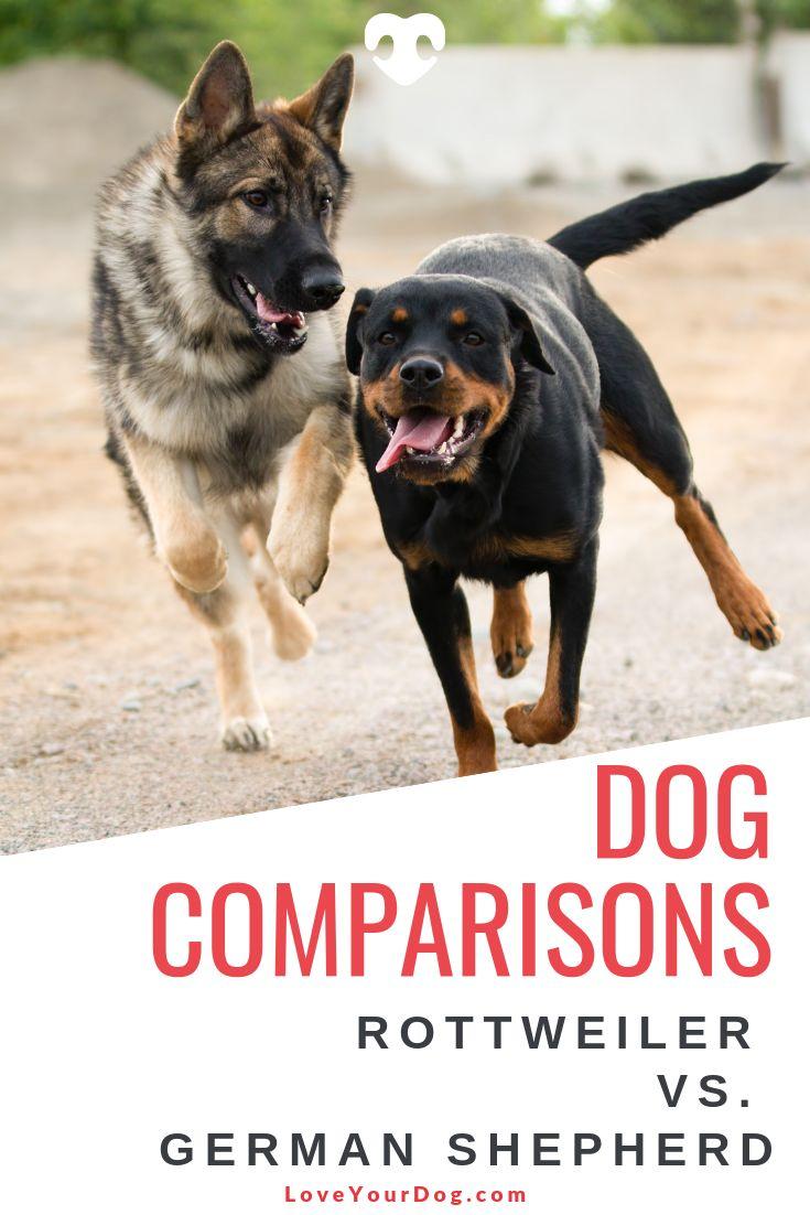 Rottweiler vs. German Shepherd: Breed Comparison ...