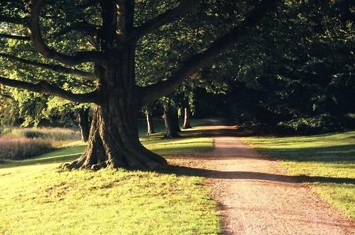 In the park (taken with Foigtländer vito CL)