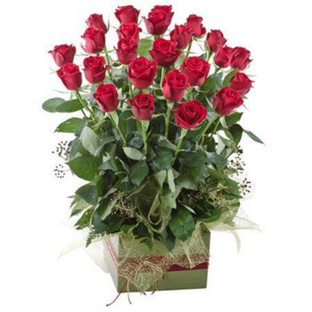 24 Red Roses 'Splendid'