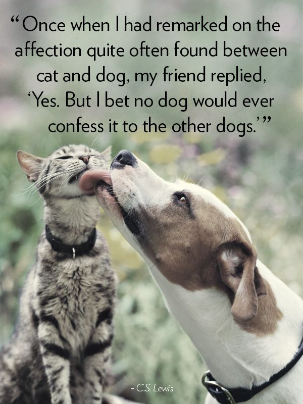 16 Dog Quotes That Will Melt Your Heart My Friend Cs