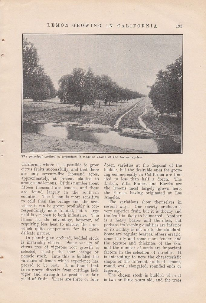 1905 Agriculture Article: Lemon Growing in California by Elizabeth A Ward