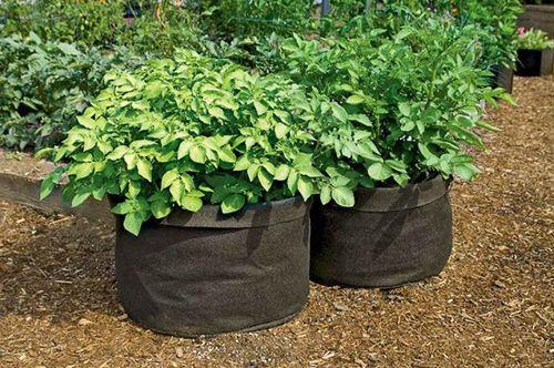 Выращивание-картофеля-в-мешках