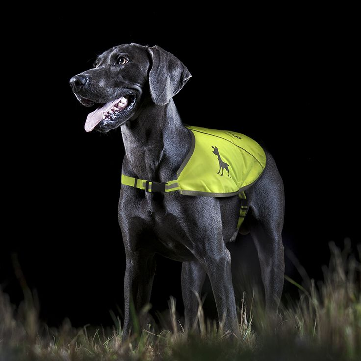 Keep your dog safe on every walk in this visibility vest with reflective strips