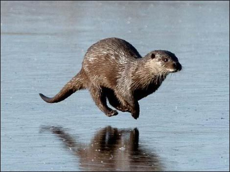 """The original description for this was """"Otter Otter Otter"""" and I think that sums the photo up quite nicely."""