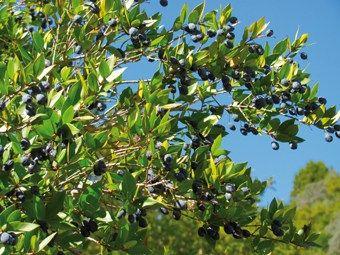 http://www.ecohabitar.org/tag/permacultura/page/7/ ...  [1] a permacultura es una filosofía integral de vida que hace eco en lo sustentable, buscando un desarrollo armónico de la sociedad humana y del medio ambiente. Esto tiene, por supuesto, una relación con el diseño y manejo de parques y jardines. Como la permacultura busca conseguir la autosuficiencia del hombre combinando el cultivo alimentario con el forestal y la ganadería a pequeña escala, las iniciativas de este tipo marcan cambios…
