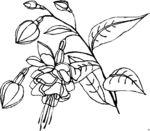 Мобильный LiveInternet Цветочки и ягодки для творчества (вышивка, роспись и тп). | DragooonFly - Со всего света, только самое лучшее! |