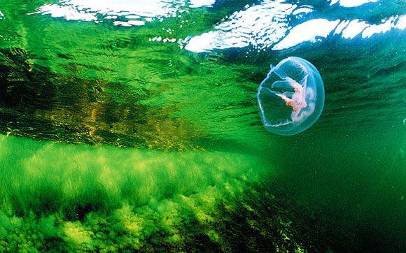 Itämeri huutaa pikaista ja pysyvää apua