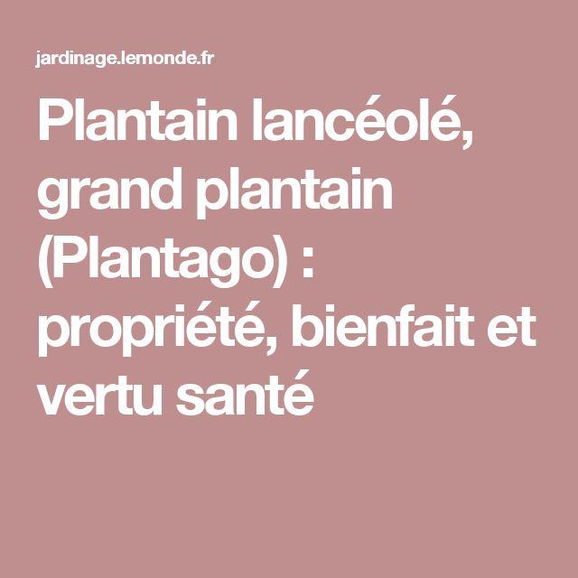 plantain lanc ol grand plantain plantago propri t. Black Bedroom Furniture Sets. Home Design Ideas