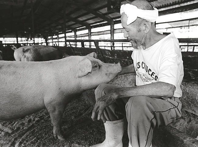 Toshiteru Yamaji, did a photographic series on a single Japanese pig farmer over a ten year period and was awarded the 13th Japan Self-Publishing Award, Graphic Prize for his photo book 'Pig and Papa'.
