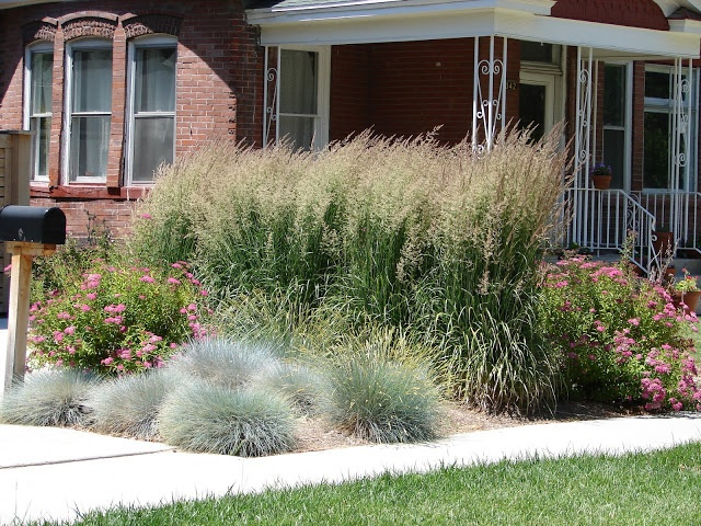 58 best images about ornamental grasses on pinterest for Short grasses for landscaping