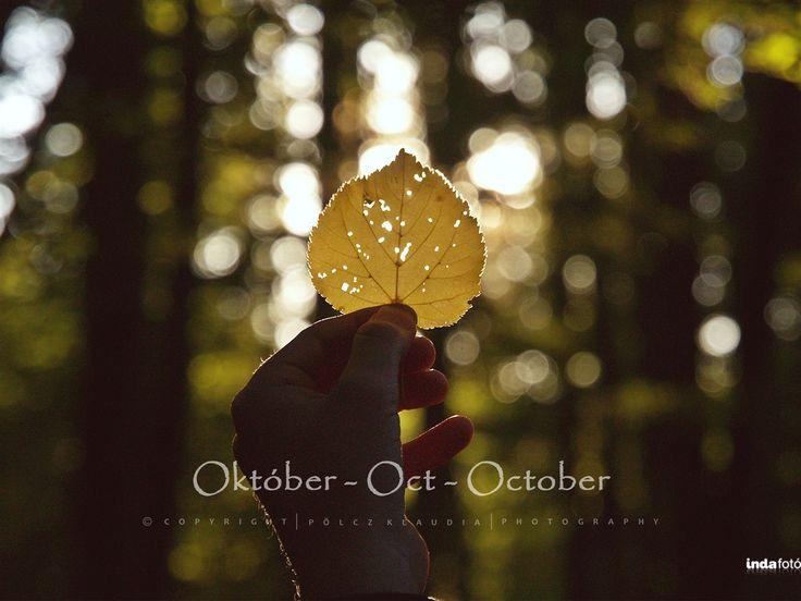Pölcz Klaudia - kisklau: Októberi háttérképek