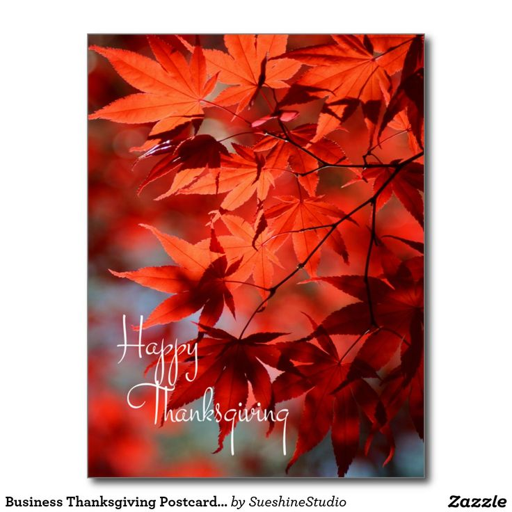31 best Business/Corporate Thanksgiving Cards and Postcards images