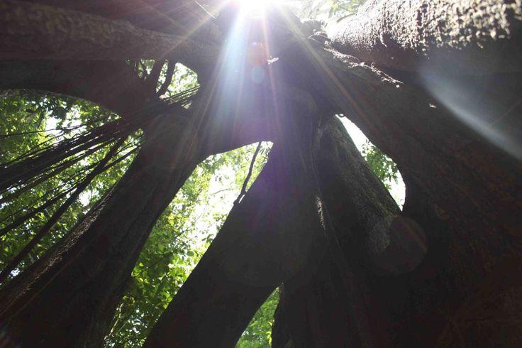 Selva Lacandona