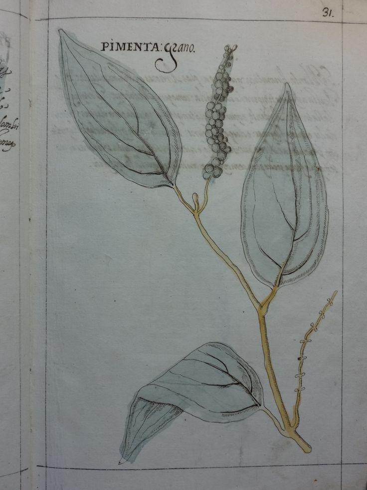 """DSC01309 - Manuel Godinho de Herédia (1563-1623)- """"Summa de arvores e plantas da India intra Gangez"""". 1612. Manuscrito, original autógrafo. Arquivos da Abadia de Tongerlo - Cota: AAT-V 133"""