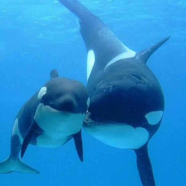 Save the whales! I just recently saw the documentary 'BlackFish' and it broke my  heart. I have a whole new love & respect for these beautiful creatures.
