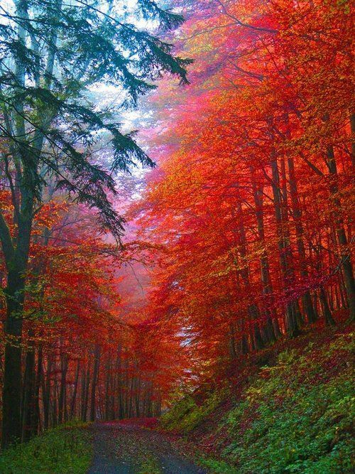 What a beautiful sight.  Mother Nature at her best.  Autumn Forest, Saxony, Germany