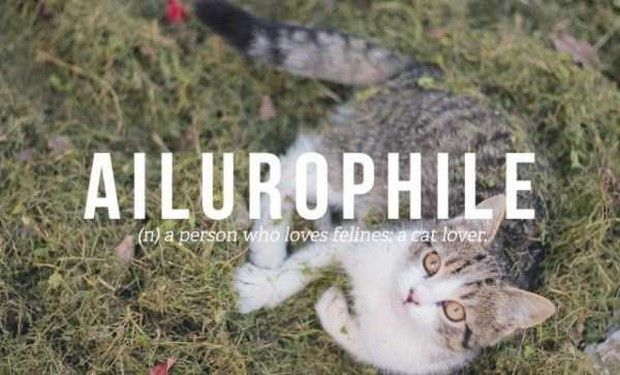 Unbelievable But Actually Exist: Ailurophile