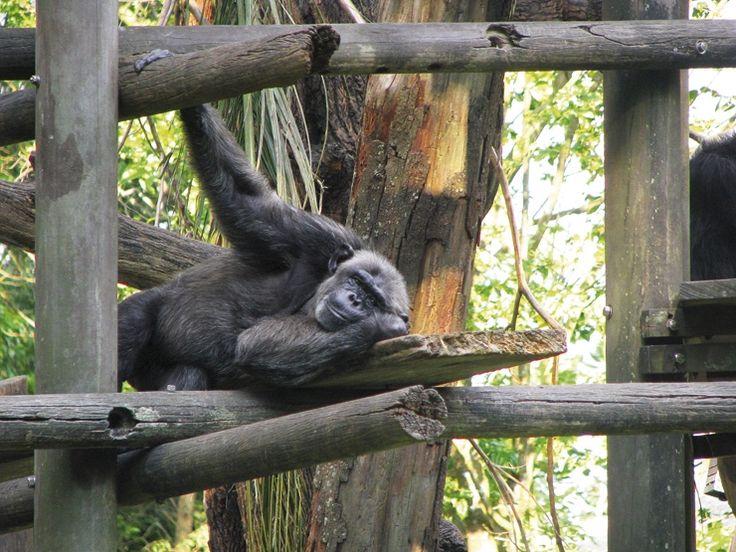 Мечтаех за Сингапур така, както Карен Бликсен за Африка. Беше силно желание, което се сбъдна благодарение на мои приятели, които живеят там от години