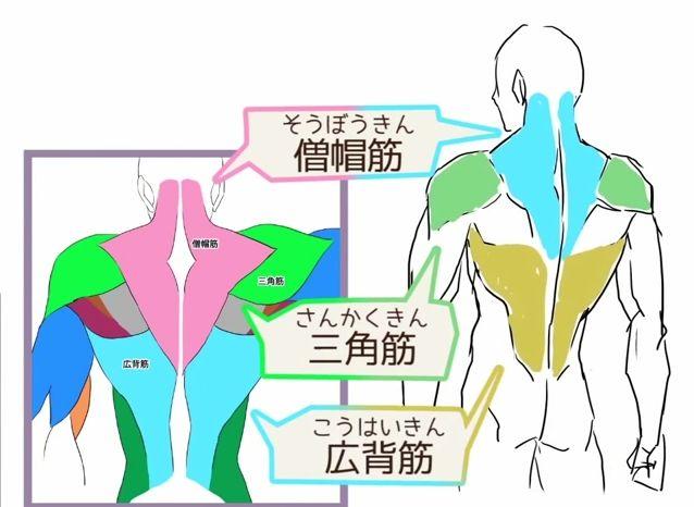 背中の描き方  スジだけ描いても細マッチョにはならない!? 上半身の筋肉の描き方講座|イラスト描き方  Back - How to 1  How to draw upper body muscles | Illustration tutorial