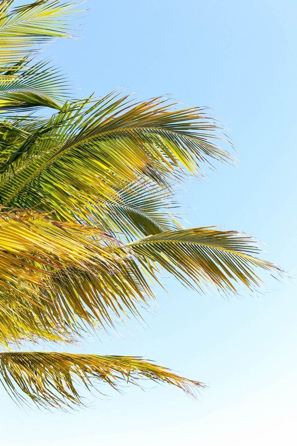 A weekend guide to Captiva Island Florida - perfect for a last minute summer trip or an autumn travel adventure for some much-needed sunshine.