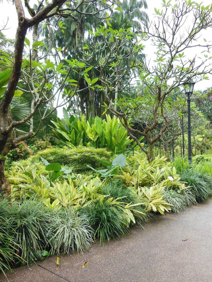 Plumeria, Heliconia, Alpinia zerumbet 'Variegata' (variegated Shell Ginger), Osmoxylon & Liriope - National orchid garden, Singapore Botanic Gardens