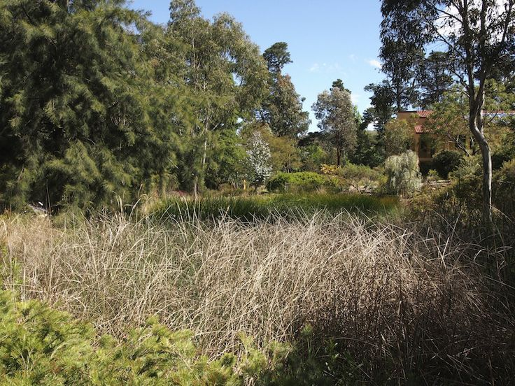 The 21 best images about Walcott native garden Canberra on