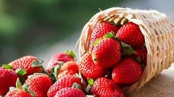Podrobný návod: Vysaďte si jahody, veď je posledná šanca stihnúť to včas!