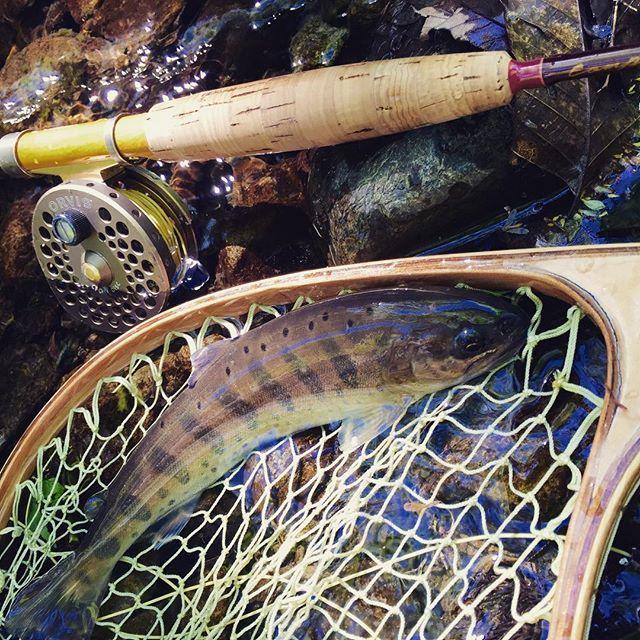 疲れたー!釣りしたーい! ってことで過去picに癒される。 #疲れた#釣りしたい#フライフィッシング#flyfishing#山女魚#釣り#釣りガール#渓流#オービス#orvis#カンパネラ#カムパネラ#campanella