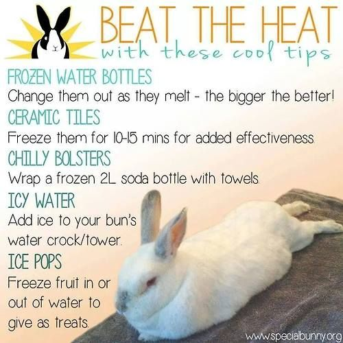 Keep your Rabbit cool in the summer!