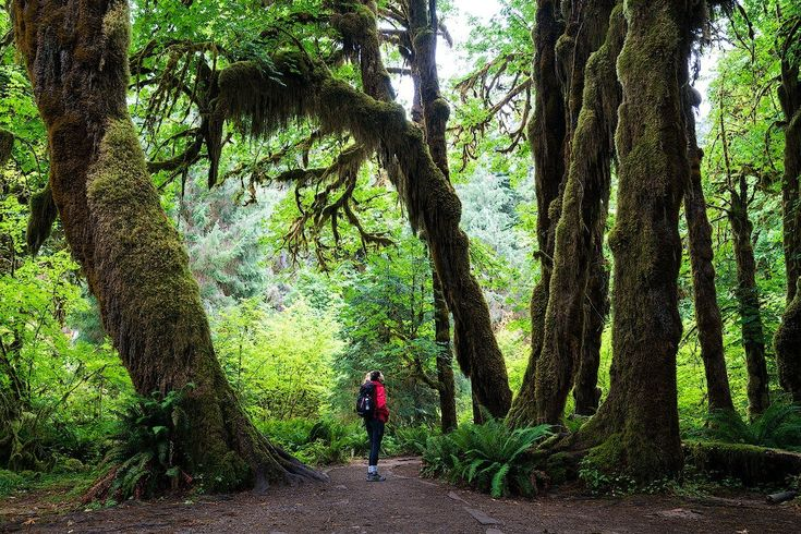 Guide to Olympic National Park: 59 National Parks Road Trip