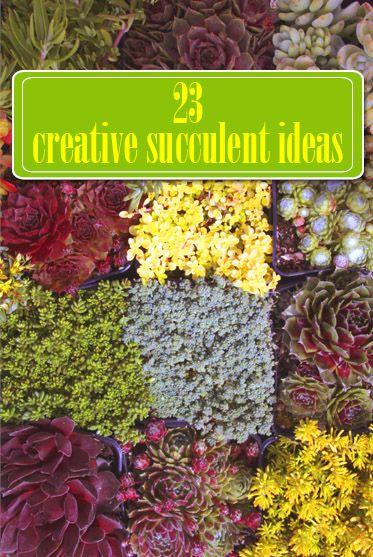 Not your typical succulents...23 unconventional planter ideas
