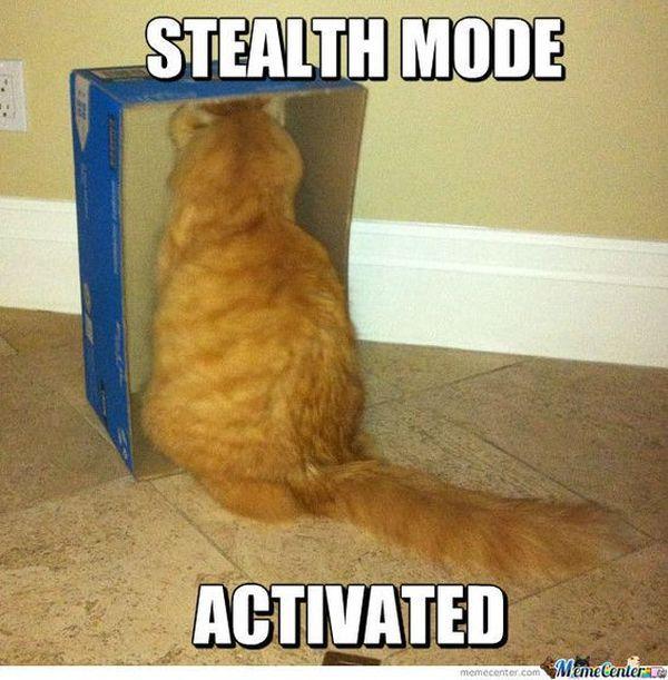 63 Ideas Funny Memes For Kids Hilarious Grumpy Cat For 2019 Cute Cat Memes Funny Grumpy Cat Memes Grumpy Cat Humor