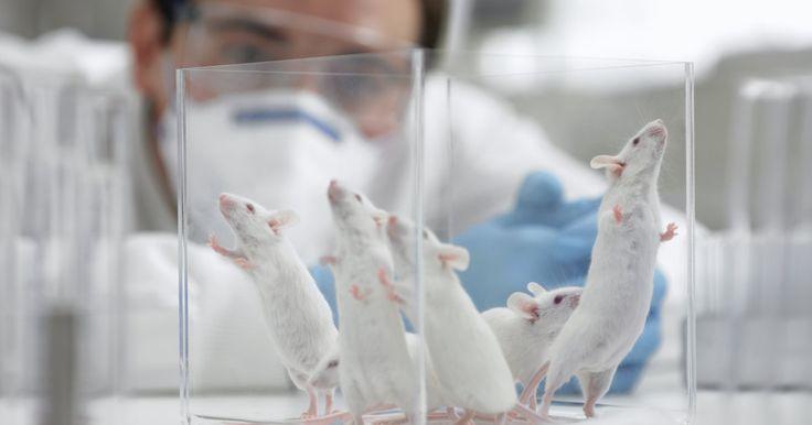 En utilisant deux types particuliers de cellules, des scientifiques ont créé un embryon artificiel de souris en laboratoire.