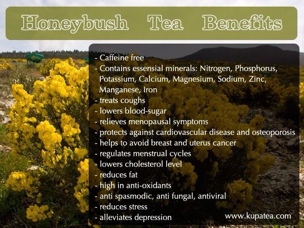 Endless Honeybush Tea Benefits