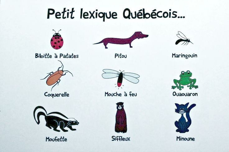 Québécois French names for animals on postcard | OffQc | Quebec French Guide