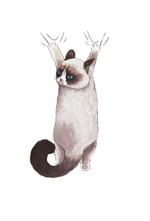 Cat Illustration Tumblr 14 best Grumpy Cat ima...