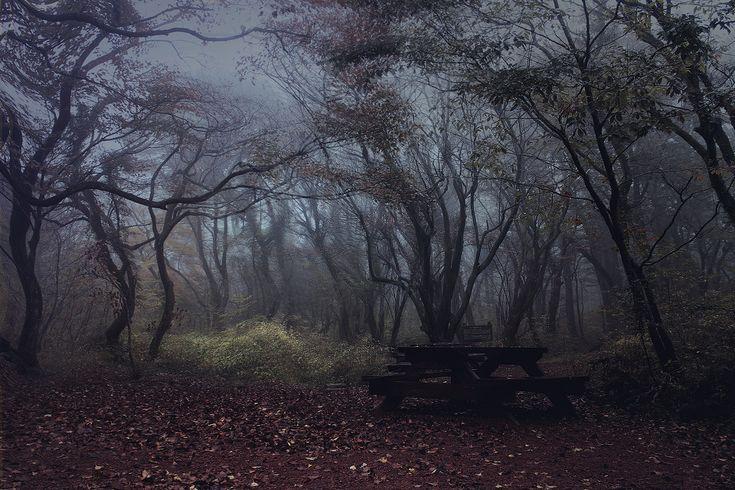 Deart Studio :: 제주 사려니숲