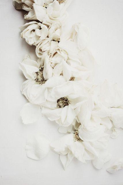 ❄ White flowers