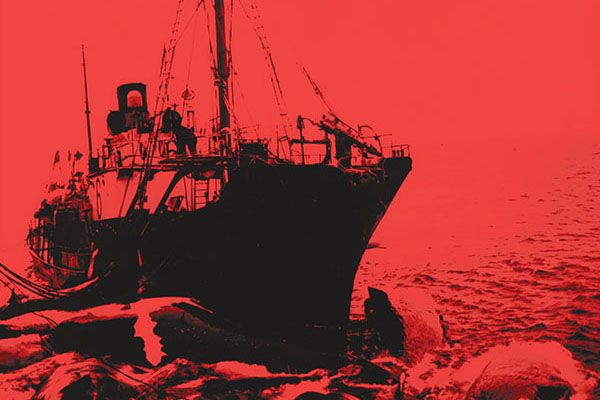Fifty years ago 180,000 whales disappeared from the oceans without a trace, and researchers are still trying to make sense of why. Inside the most irrational environmental crime of the century.