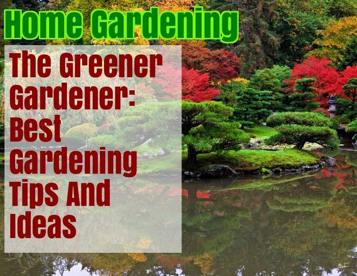 Get Started With Organic Gardening By Using These Suggestions – Gardening Ideas