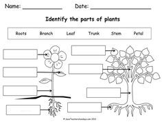 Label parts of a plant and parts of a tree (worksheet).pdf