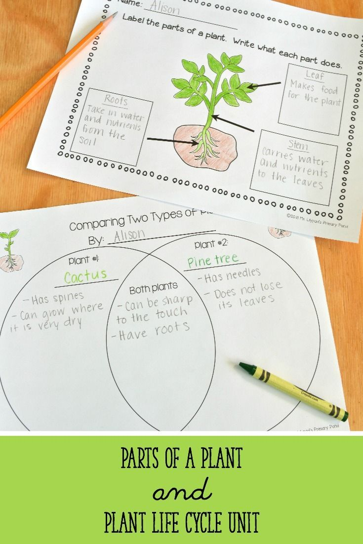 This plant life cycle and parts of a plant unit has lesson ...