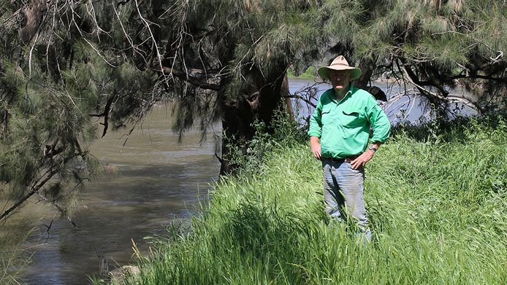"""David Mott says the lush green grass on Berry Jerry Station is an example of how the Murrumbidgee River can be successfully harnessed. The Mott family has owned the 2,161 hectare riverside property for 27 years and in that time he has seen the best and the worst from nature. But even in severe droughts the river helped them survive. """"Like everywhere else there was a lack of feed, but the one thing we had no problem with is water,"""" he said. """"We have very good underground water here as well as"""