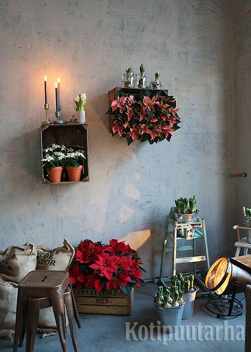 Joulukukkasomistuksen kahvila Roots Helsinkiin teki bloggaaja Viena K. Median joulukukka-aamun järjesti Kauppapuutarhaliitto ry.