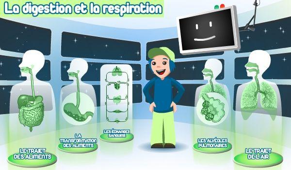 Le corps humain  la digestion et la respiration  le système musculaire  le squelette  le système nerveux  théorie, exercices en ligne ou à télécharger.