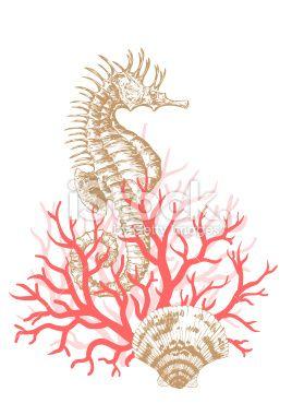 Seahorse, Coral and Shells Royalty Free Stock Vector Art Illustration