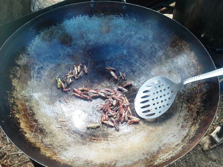 Insects like Grasshoppers can provide us with calories and protein, and yes even a tasty treat during a survival situation, cook them if you can. But adding insects to your regular diet is okay too.